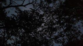 Härlig natthimmel med den fantastiska naturen Royaltyfria Bilder
