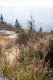 Härlig naturäng med berggräs Blåtthav, Sky & moln arkivbilder