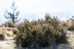 Härlig naturäng med berggräs Blåtthav, Sky & moln arkivfoto
