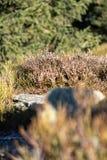 Härlig naturäng med berggräs Blåtthav, Sky & moln royaltyfri fotografi