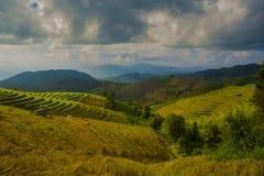 Härlig natur av den Pongpeng skogen arkivfoto