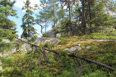 Härlig natur av Finland, Koli Royaltyfri Bild
