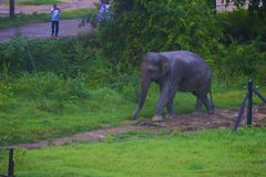 Härlig natur av Sri Lanka royaltyfri foto