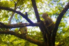 Härlig natur av Sri Lanka fotografering för bildbyråer
