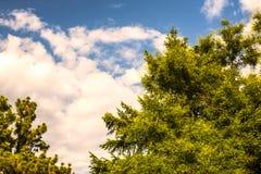 Härlig natur för trädhimmel Arkivbild