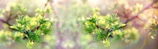 Härlig natur i selektiv och mjuk fokusen den vår, på vårsidor royaltyfri foto