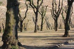 Härlig natur i Siena, Italien Royaltyfri Fotografi