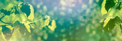 Härlig natur i våren - nya vårsidor arkivbild