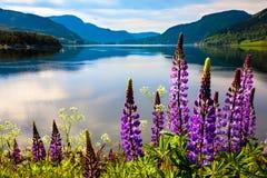 Härlig natur Norge Royaltyfria Bilder