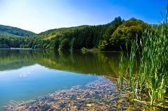 Härlig natur och grönska på sjön i den Semenic nationalparken, Banat region Arkivfoton