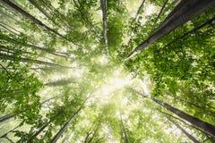 Härlig natur på morgonen i den dimmiga vårskogen med solen