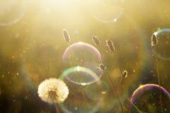 Härlig naturbakgrund med såpbubblor Arkivfoto