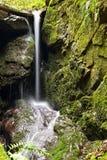 Härlig naturbakgrund med ström- och skogvår i natur royaltyfria foton