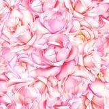 Härlig naturlig bakgrund för vattenfärg med rosa rosor arkivbild