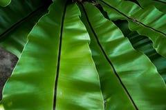 Härlig naturlig bakgrund med det tropiska gröna bladet Royaltyfria Bilder