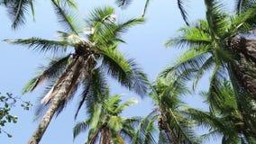 Härlig naturlig strand med palmträd lager videofilmer