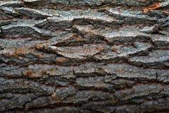 Härlig naturlig textur av wood plankabruk för skäll som texturerat naturträ arkivfoton