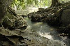Härlig naturlig vattenfallhandfat i skogen arkivbilder