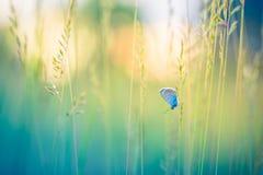 Härlig naturnärbild, sommarblommor och fjäril under solljus Lugna naturbakgrund Fotografering för Bildbyråer