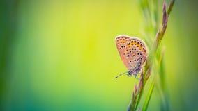 Härlig naturnärbild, sommarblommor och fjäril under solljus Lugna naturbakgrund Arkivbild