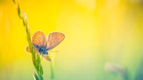 Härlig naturnärbild, sommarblommor och fjäril under solljus Lugna naturbakgrund Royaltyfria Bilder