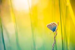 Härlig naturnärbild, sommarblommor och fjäril under solljus Lugna naturbakgrund Royaltyfri Fotografi