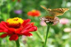 härlig naturplats Royaltyfri Foto