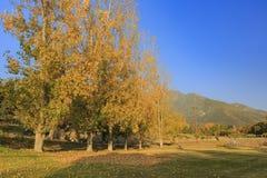 Härlig nedgångfärg över ekdalgångområde arkivfoton