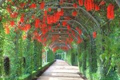 Härlig New Guinea ranka eller scharlakansrött jadevinranka som blomstrar i den trädgårds- tunnelen royaltyfri fotografi