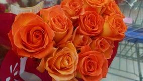 Härlig nolla rd rosor för gf ett e royaltyfri bild