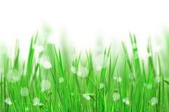 härlig ny gräslampa reflekterar Arkivfoto
