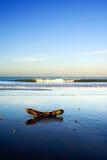 härlig ny platstaipa zealand för strand Arkivbild