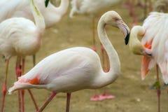 Härlig och färgrik flamingo arkivfoto