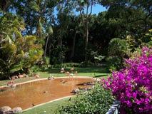Härlig och fridsam dag i zoo Royaltyfria Bilder
