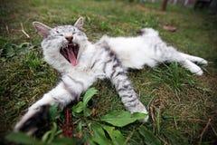 Härlig och glad katt Royaltyfria Bilder