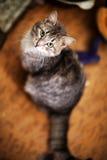 Härlig och glad katt Royaltyfri Foto