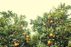 Härlig och orange dunge Arkivfoto