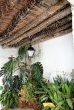 Härlig och ovanlig celling med överflöd av växter i Frigiliana - spansk vit by Andalusia Royaltyfria Foton