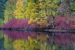 Härlig och pittoresk flodbank som förbluffar färger av hösten Arkivbild