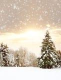 Härlig och snöig vinterskogbakgrund Royaltyfri Fotografi