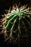 Härlig och taggig kaktusnärbild Arkivbilder