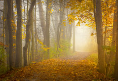 Härlig Ohio soluppgång i skogen Royaltyfria Foton