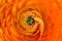 Härlig orange blomningmakro som ser fantastisk Arkivfoto