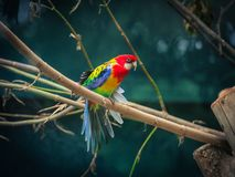Härlig orange papegoja på trädet som tycker om royaltyfri fotografi