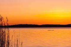 Härlig orange vintersolnedgång över vatten och land med fåglar på en sjö royaltyfria bilder