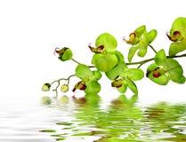 härlig orchid Arkivbild