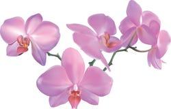 härlig orchid stock illustrationer