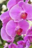härlig orchid Arkivbilder