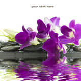 härlig orchidpurple Arkivbilder