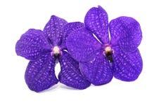 härlig orchidviolet Royaltyfri Foto